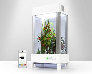 Niwa, le jardin connecté